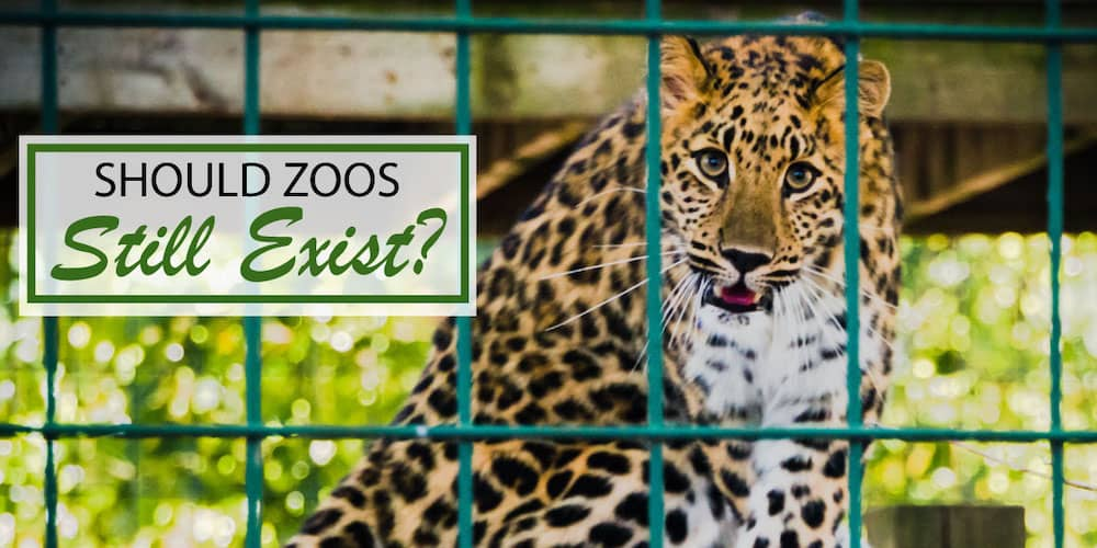 Pdf The Future Of Zoos And Aquariums Conservation And Caring